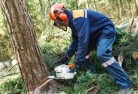 Benalla Tree felling services 21