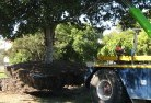 Benalla Tree felling services 4